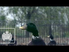 Bingo Players ft. Far East Movement - Get Up (Rattle) (Official Video) (Ministry of Sound TV)